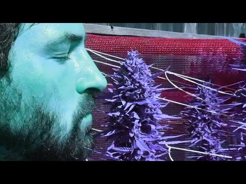 420 Harvest Special – Must Be 18+ to Watch!