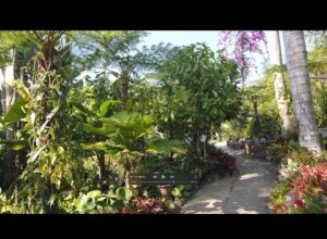 Visiting A Lush Tropical Garden Near Puerto Vallarta In Mexico