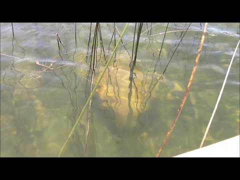 Are There Ancient Ruins In The Waters Of Lake Titicaca In Bolivia?